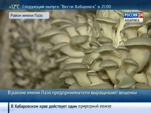Теплицы: овощеводство и цветоводство, гидропоника и