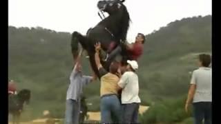 Bu atlar hər kəsi şok edir