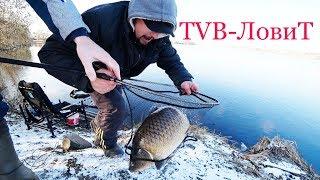 Ловля огромных Карпов и Карасей в ноябре на дикаре   Рыбалка на фидер поздней осенью 2017