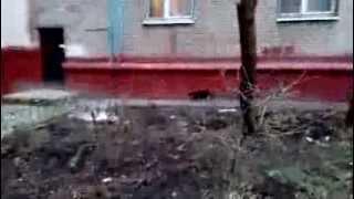 Cat walks by himself Кот гуляет сам по себе