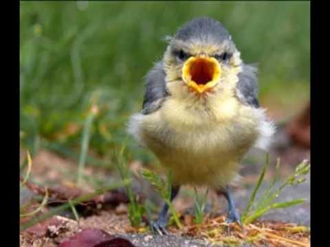 L'uccellino della comare