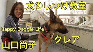 犬のしつけ教室 Happy Doggie Life 業務内容 しつけ方教室・出張トレー...