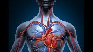 ★ РЫБИЙ ЖИР улучшит циркуляцию крови.  Чеснок уменьшает давление. КАШТАН справится с варикозом.
