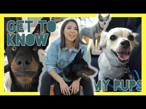 SO YOU WANTED TO GET TO KNOW MY DOGS?!