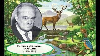 """Рассказы в картинках: Е.И. Чарушин """"Что за зверь?"""""""