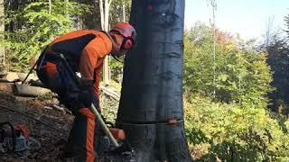 Tree felling 🌳 - working in Czech forests🦌