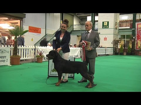 Birmingham National Dog Show 2016 - Working Veteran group