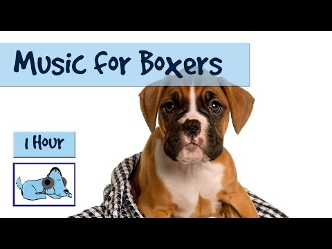 Music for Boxers! Boxer Dog Music, Calm Your Boxer Dog, Relaxing Music for Hyper Boxers
