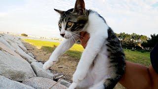 【猫のおもちゃ】海の岩場で子猫を一本釣りしてみた