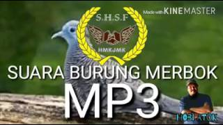 Suara Burung Merbok Mp3 Terbaikk