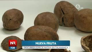 Descubren nueva fruta en Costa Rica
