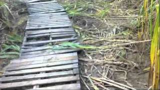 Corn Maze at Zekiah Farms in Waldorf, Maryland