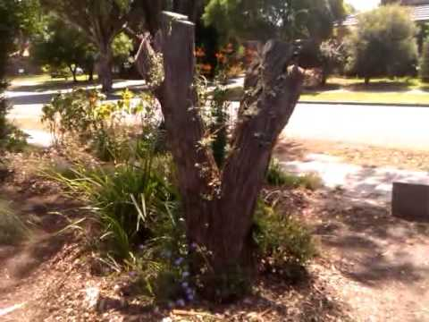 Organic Garden - Melbourne Australia