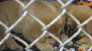 Adopt a Dog in Need of a Loving Home-Sadie Mae Foundation (Animal Rescue League)