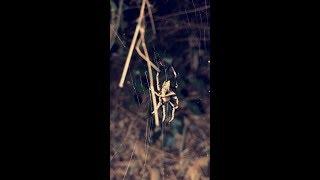اقوى مغامر: اول مغامره في غابات تايلاند المخيفة ليلا المليئه بالحشرات السامه و الافاعي