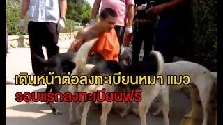เดินหน้ากฎหมายตีทะเบียนหมา-แมว ก.เกษตรฯเตรียมพิจารณาให้ลงทะเบียนรอบแรกฟรี วอนปชช.อย่าตกใจ