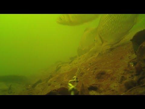 Батл!  Макуха против Технопланктона. Ловля карася.
