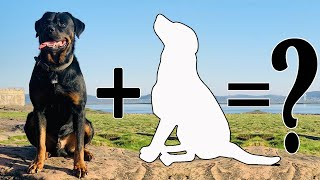 Top 10 Remarkable Rottweiler Mixes that you didn't know | Rottweiler Cross Breeds