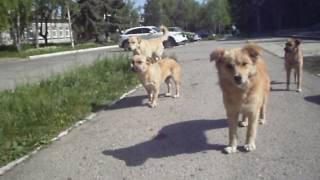 Действенный метод защиты от нападения бродячих собак