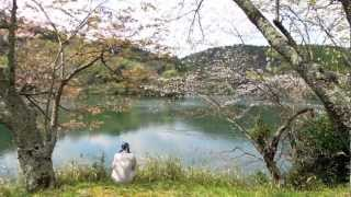 姫神ーー見上げれば、花びら 空を見上げて自分の存在に感謝するにはいい...
