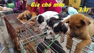 Tham quan chợ bán chó mèo cảnh rẻ và đẹp – Pets Market