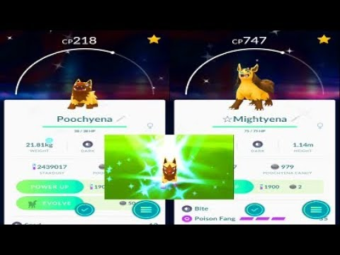 pokemon go shiny poochyena catch shiny mightyena evolution lunar new year event youtube. Black Bedroom Furniture Sets. Home Design Ideas
