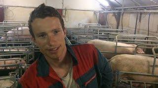 Porc : les jeunes éleveurs s'interrogent