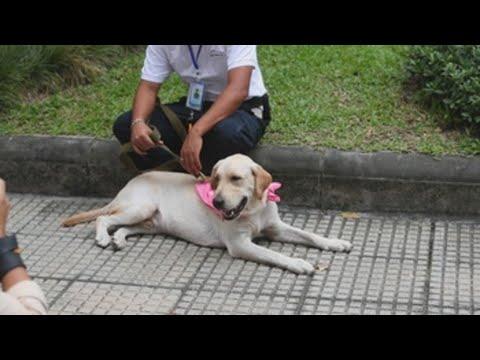 Tailandia dispone de una unidad canina que detectar el covid con el olfato