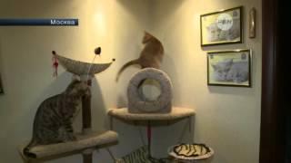 Маленький котенок оказался на грани смерти из за жадных продавцов