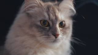 WAS DENKT SICH DIESE KATZE ? | Kiko & Bao