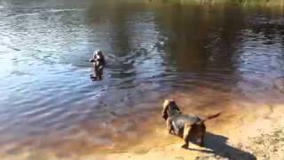 Hunde Am / Im See, Können Alle Hunde Im Wasser Schwimmen ?