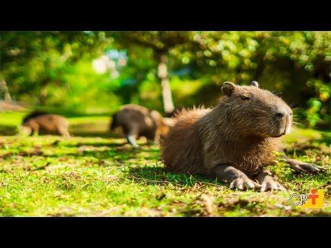 Clique e veja o vídeo Curso a Distância Abate e Comercialização de Animais Silvestres CPT