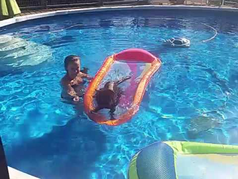 Florida Living. Maine Coon takes a Swim in Hot July