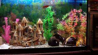 растения для аквариума с aliexpress