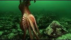 Unternehmen Oktopus - Vorstoß ins Reich der Riesenkraken - Arte - Teil 1 von 3