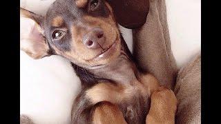Смешные собаки 2014. Приколы с собаками
