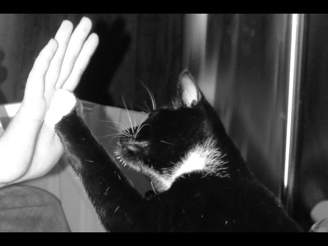 Cat Tricks - How to teach your cat to high five!