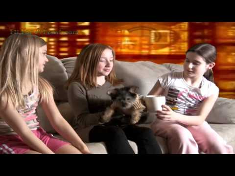 Interview about Briana's Teacup Yorkie Poo Puppy Dog -Yorkshire Terrier puppy