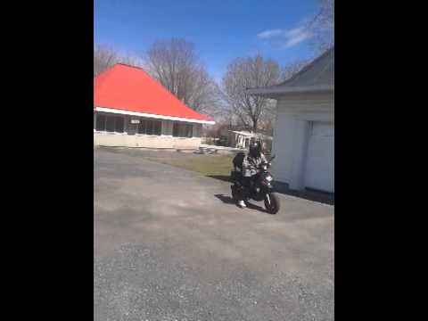 Pitbull on scooter