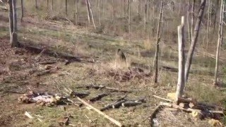 RARE! BIGFOOT SIGHTING IN KENTUCKY! SASQUATCH MUST SEE!! DONT MISS THIS!