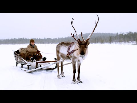 Magical Finland Sleigh Ride! | Reindeer Family and Me | BBC Earth