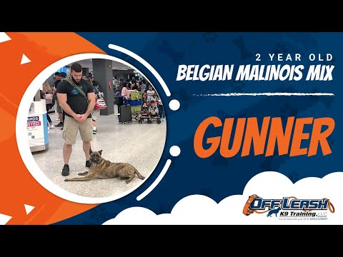Gunner | 2 Year Old Belgian Malinois Mix | Off Leash K9 | Basic Obedience | Dog Training | NOVA
