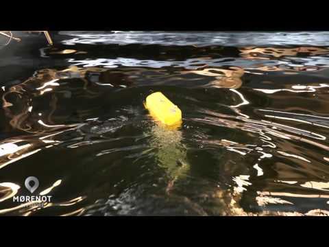 Mørenot Offshore AS