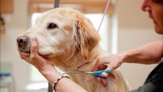 DOG GROOMING READING|call us now +442039621406