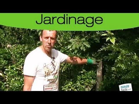 Comment tailler la haie du jardin les tapes youtube - Comment aiguiser un taille haie ...