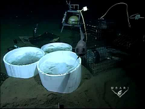 Carbon dioxide experiments on the seafloor