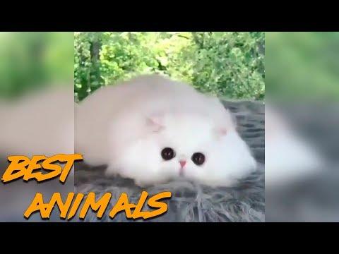 Best Animals Coub
