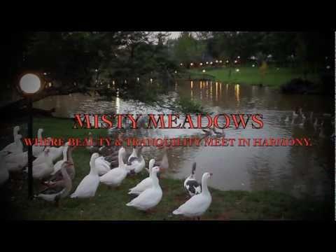 MISTY MEADOWS 1