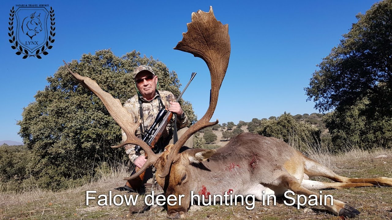 #Fallow deer hunting in Spain Europe by www.lynx.tours