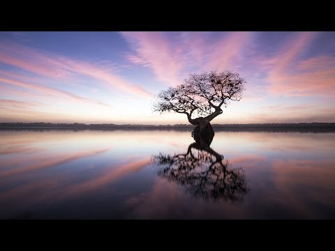 Stunning Photos of the Endangered Everglades | Mac Stone | TED Talks